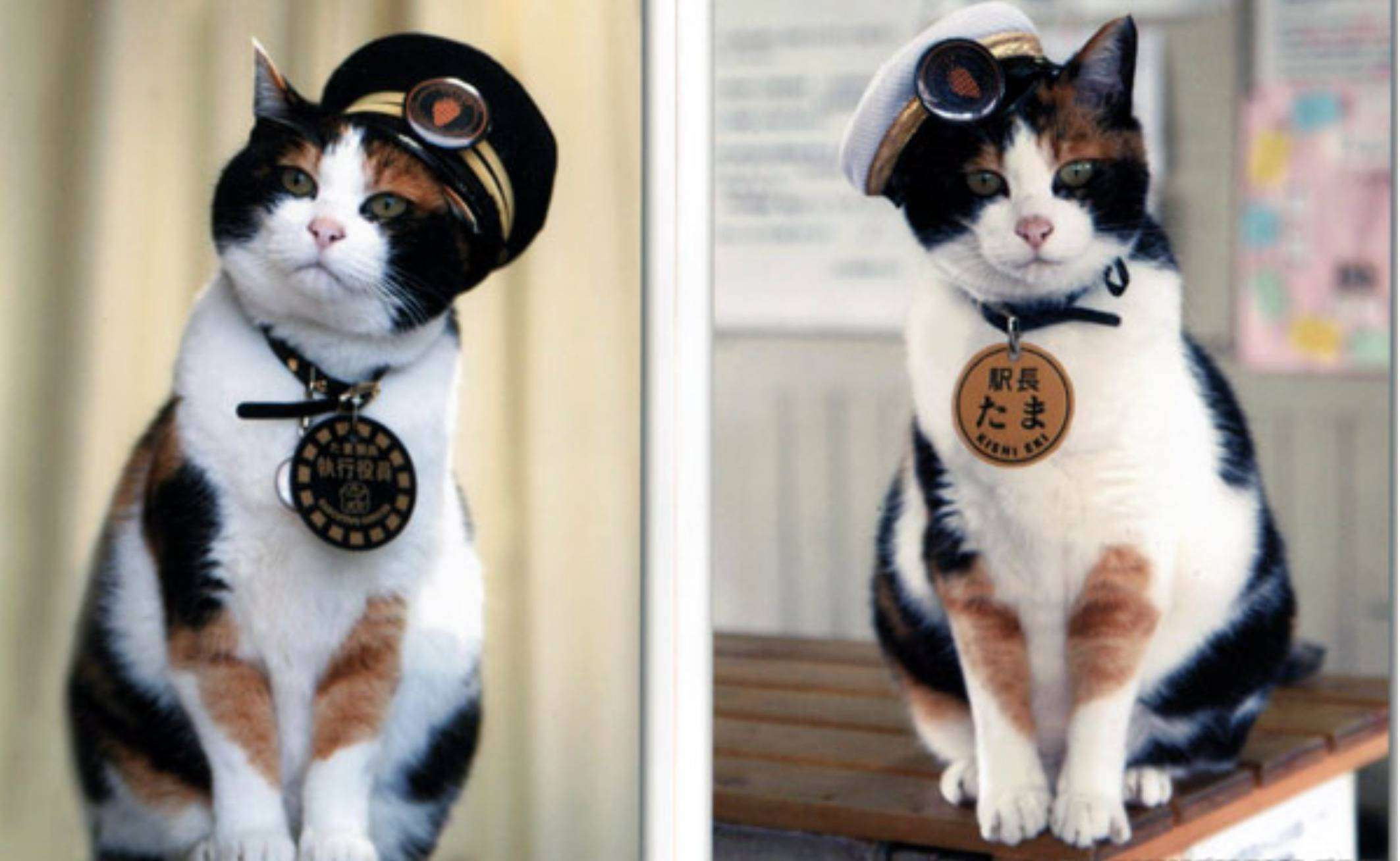 The-Super-Station-Master-Cat-Tama