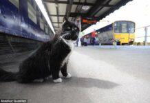 Kucing Menggemaskan Ini Dipromosikan Jadi Pembasmi Tikus di Stasiun