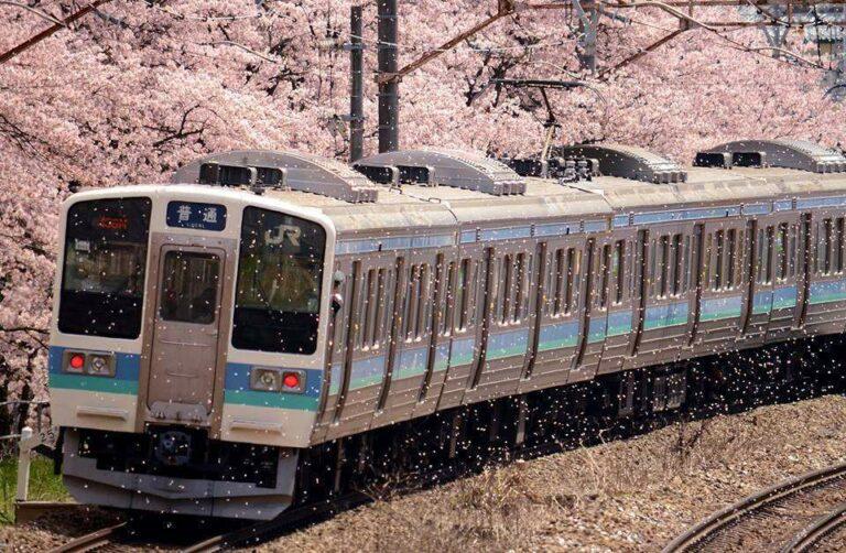 Foto oleh: Hiroshi Mitamura