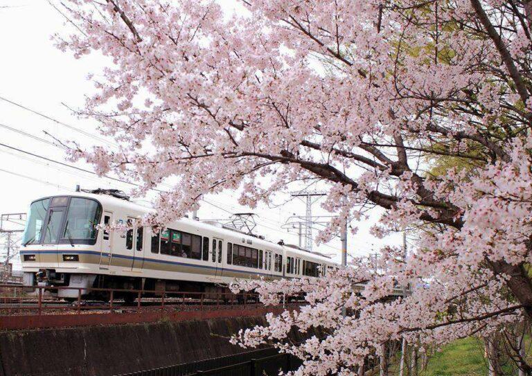 KRL seri 221 di jalur JR Sagano   Foto oleh: Taketo Nobash
