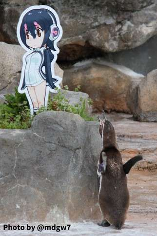 grape-kun penguin meninggal dunia
